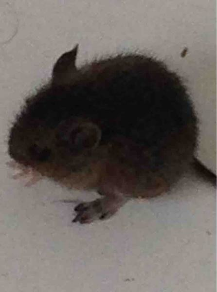 baby mouse found in house netmums chat